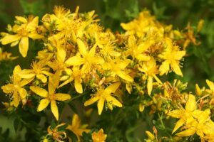 st.john's wort for anxiety and depression