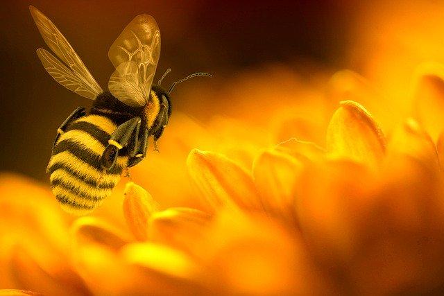 bee pollen prostate