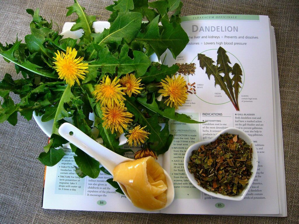 Dandelion For Diabetes