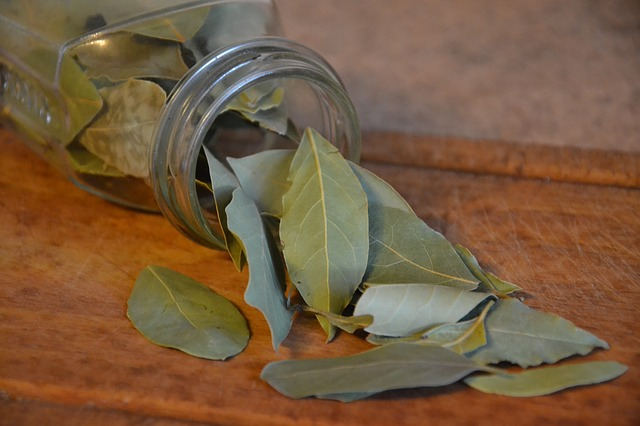 what is bay laurel essential oil