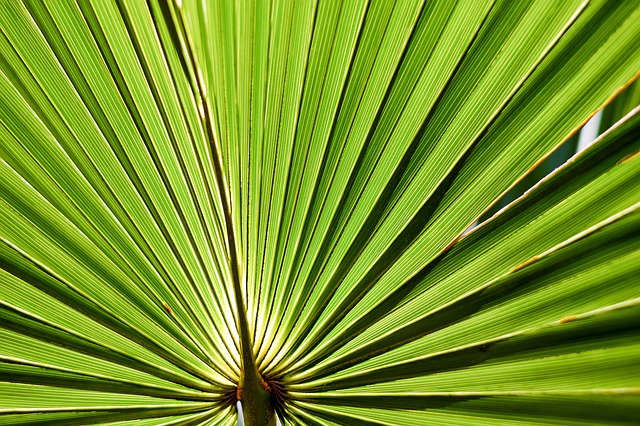 saw palmetto for the prostate