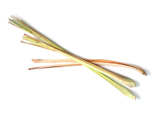what is lemongrass essential oil