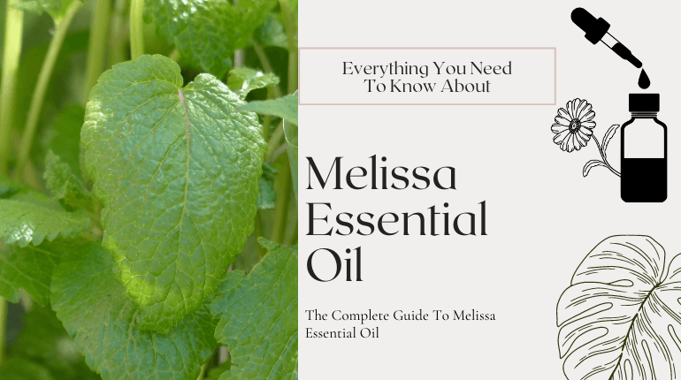 about melissa essential oil