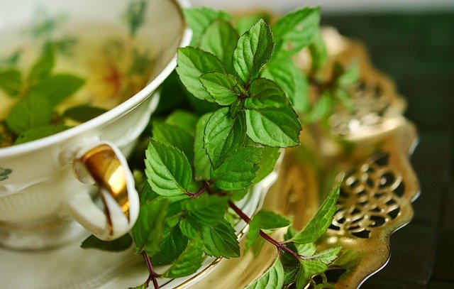 what is peppermint essential oil