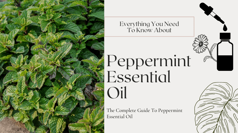 about peppermint essential oil
