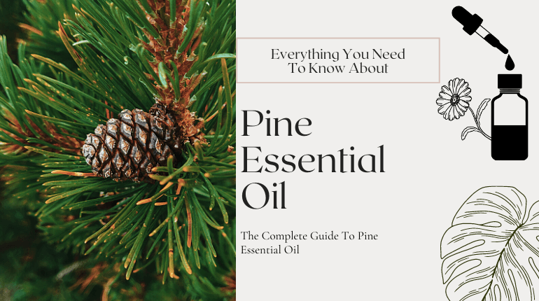 about pine essential oil