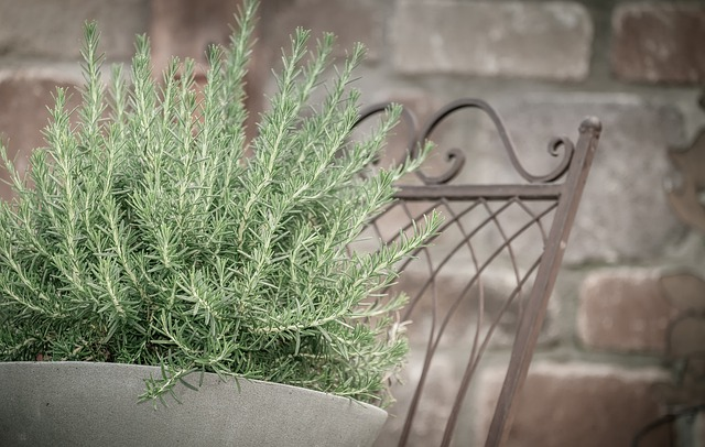 what is rosemary essential oil
