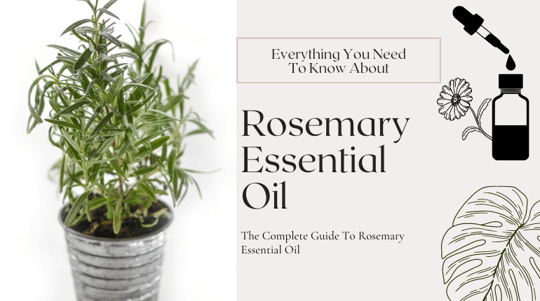about rosemary essential oil