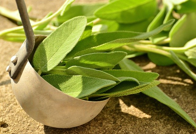 what is sage essential oil