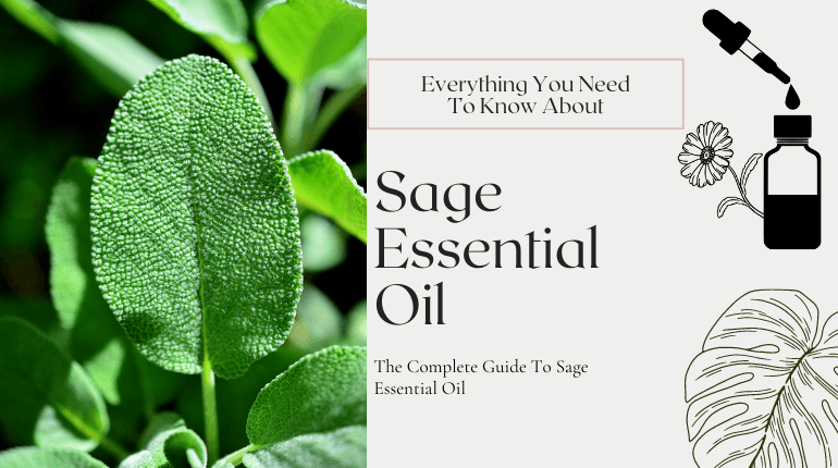 about sage essential oil