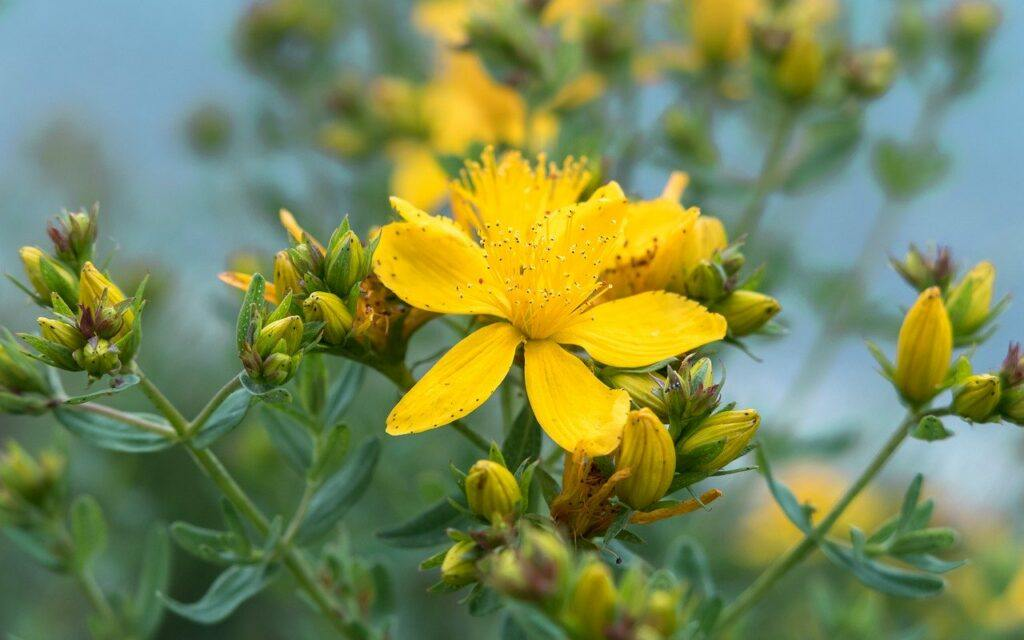 St. John's Wort And Cancer