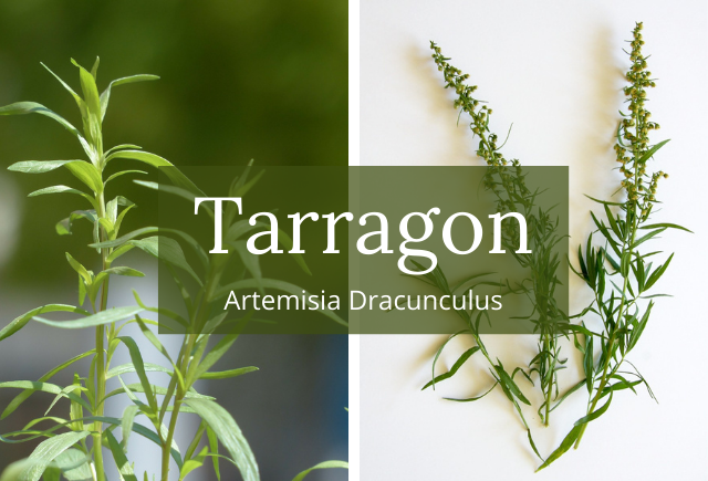 tarragon and diabetes